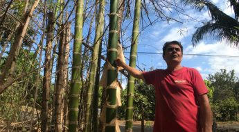 Bamboo School Costa Rica